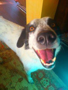 Il Cane Achille
